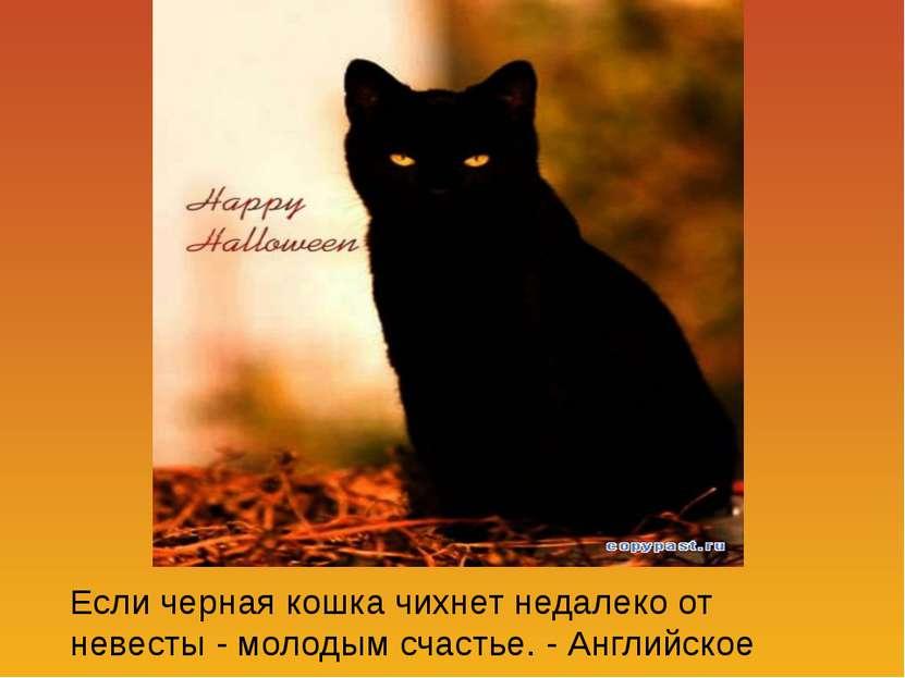 Если черная кошка чихнет недалеко от невесты - молодым счастье. - Английское ...