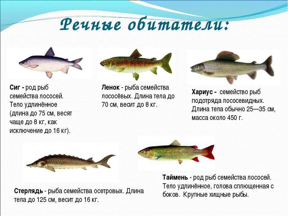 Виды рыб вьюнов