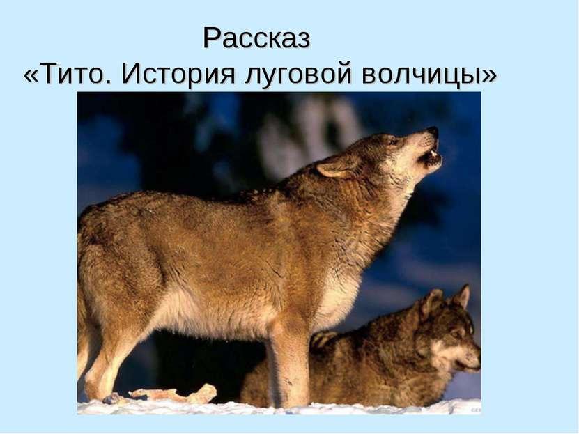 Рассказ «Тито. История луговой волчицы»