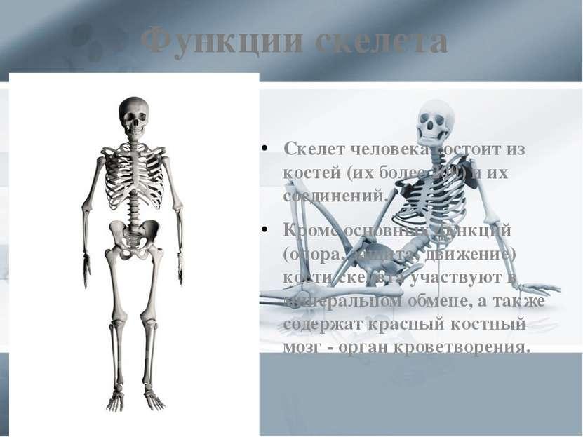 Функции скелета Скелет человека состоит из костей (их более 200) и их соедине...