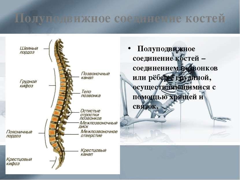Полуподвижное соединение костей Полуподвижное соединение костей – соединением...
