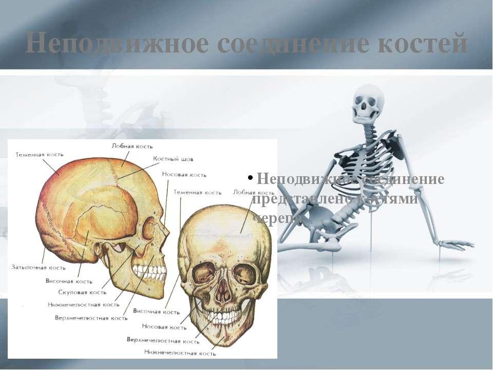 Неподвижное соединение костей Неподвижное соединение представлено костями чер...