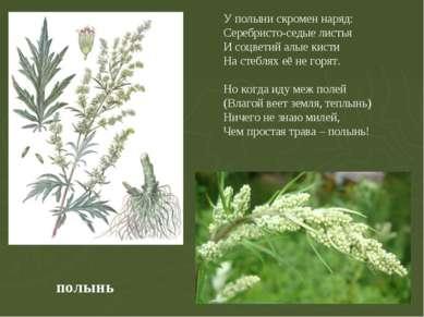 полынь У полыни скромен наряд: Серебристо-седые листья И соцветий алые кисти ...