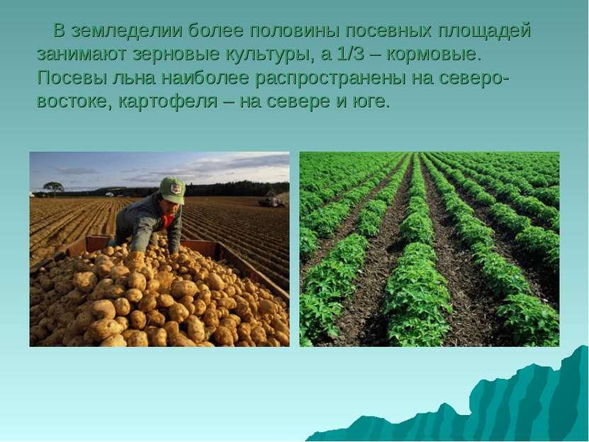 В земледелии более половины посевных площадей занимают зерновые культуры, а 1...
