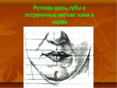 Ротовая щель, губы и пограничные мягкие ткани в норме