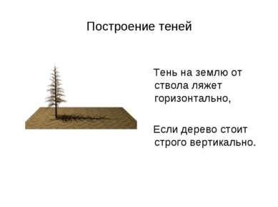 Построение теней Тень на землю от ствола ляжет горизонтально, Если дерево сто...