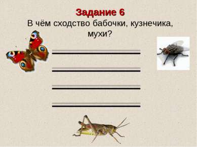 Задание 6 В чём сходство бабочки, кузнечика, мухи?