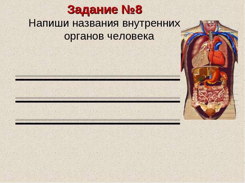 Задание №8 Напиши названия внутренних органов человека