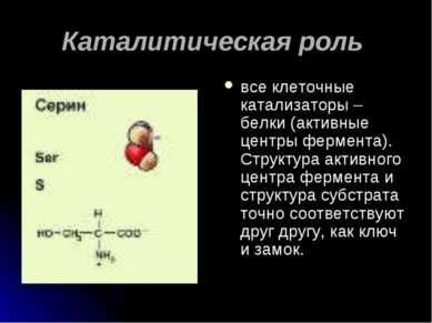 Каталитическая роль все клеточные катализаторы – белки (активные центры ферме...