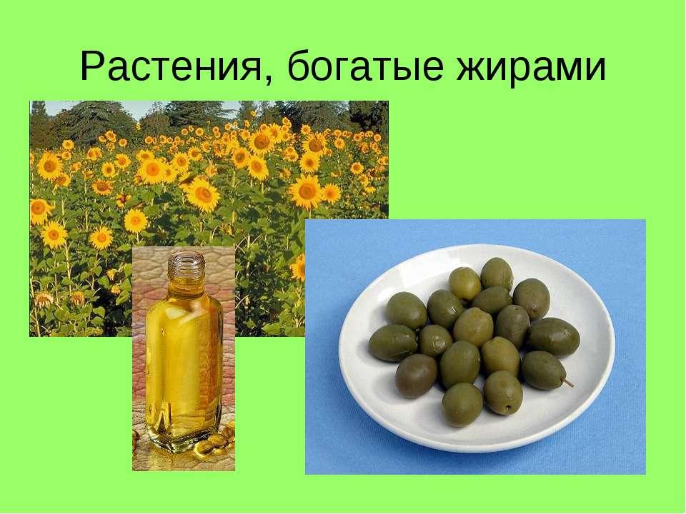 Растения, богатые жирами