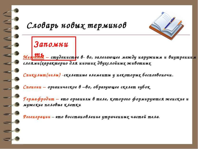 Словарь новых терминов Запомнить Мезоглея – студенистое в- во, залегающее меж...
