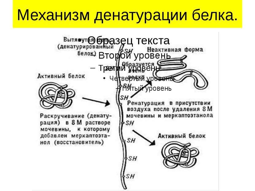 Механизм денатурации белка.