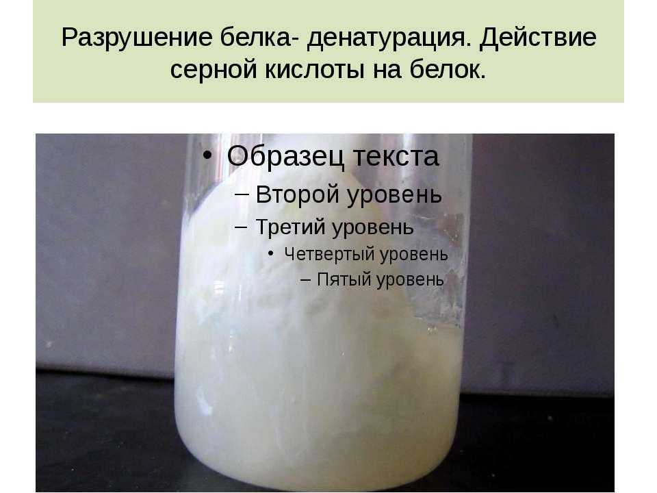 Разрушение белка- денатурация. Действие серной кислоты на белок.
