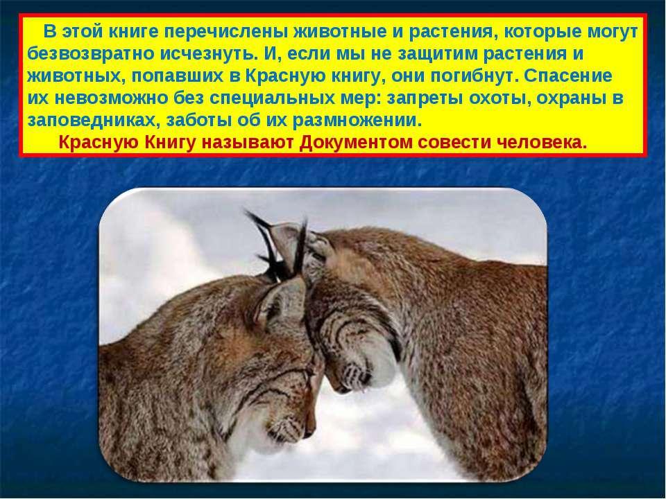 Животные занесенные в красную книгу охота на животных, занесенных в красную книгу, запрещена во многих странах