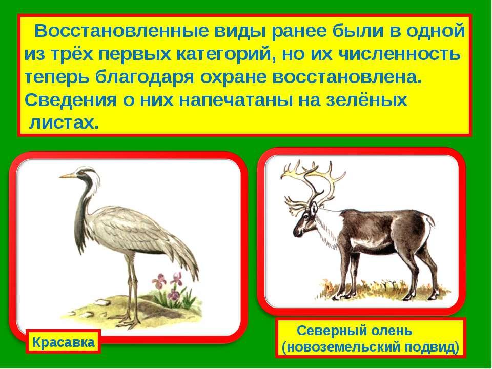Восстановленные виды ранее были в одной из трёх первых категорий, но их числе...