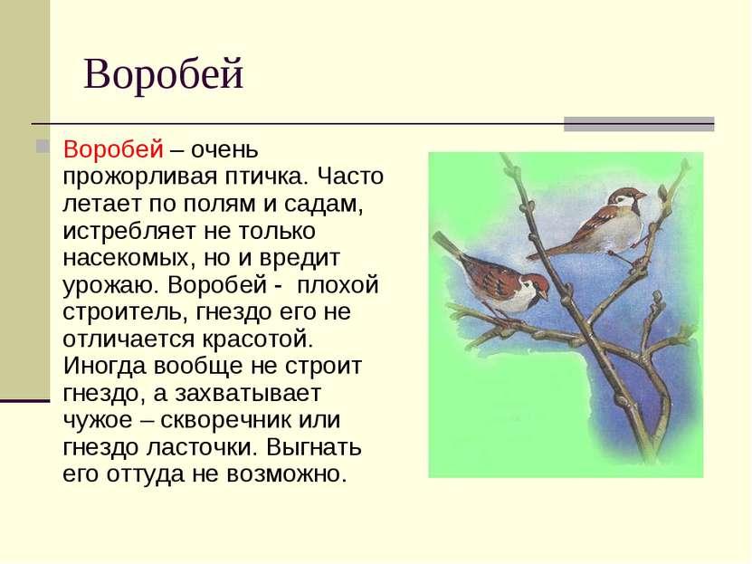 Чем питается воробей в домашних условиях - Ve-sim.ru