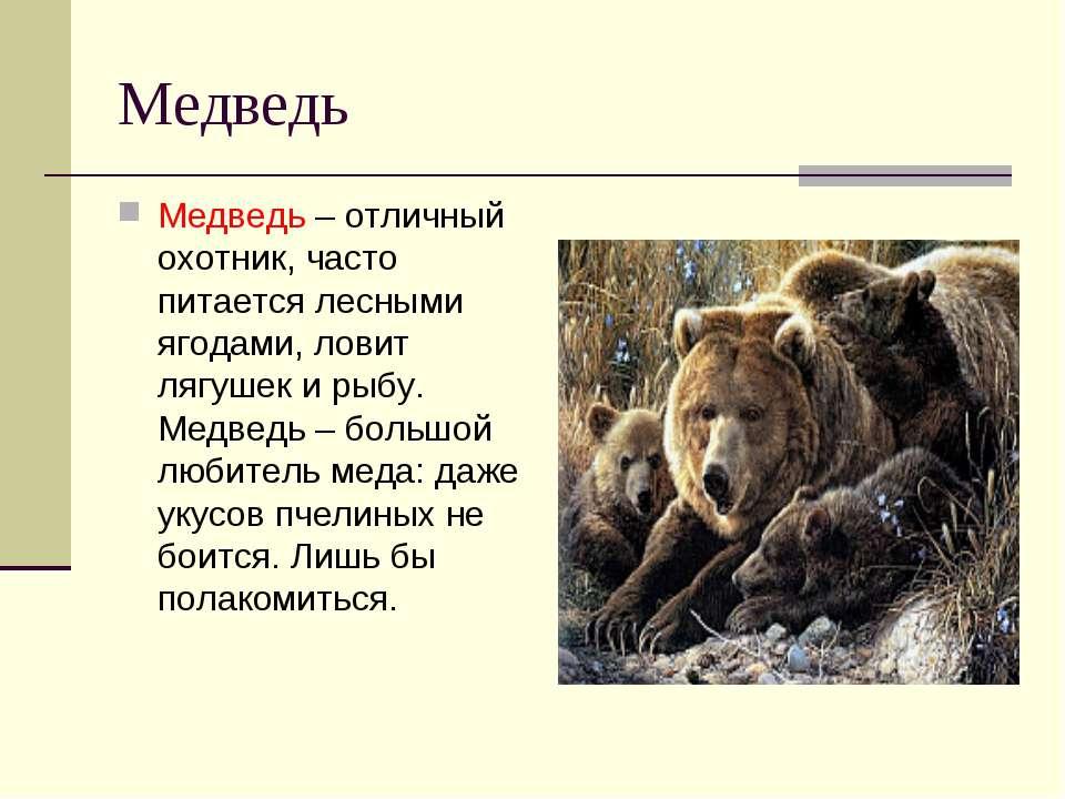 Медведь Медведь – отличный охотник, часто питается лесными ягодами, ловит ляг...