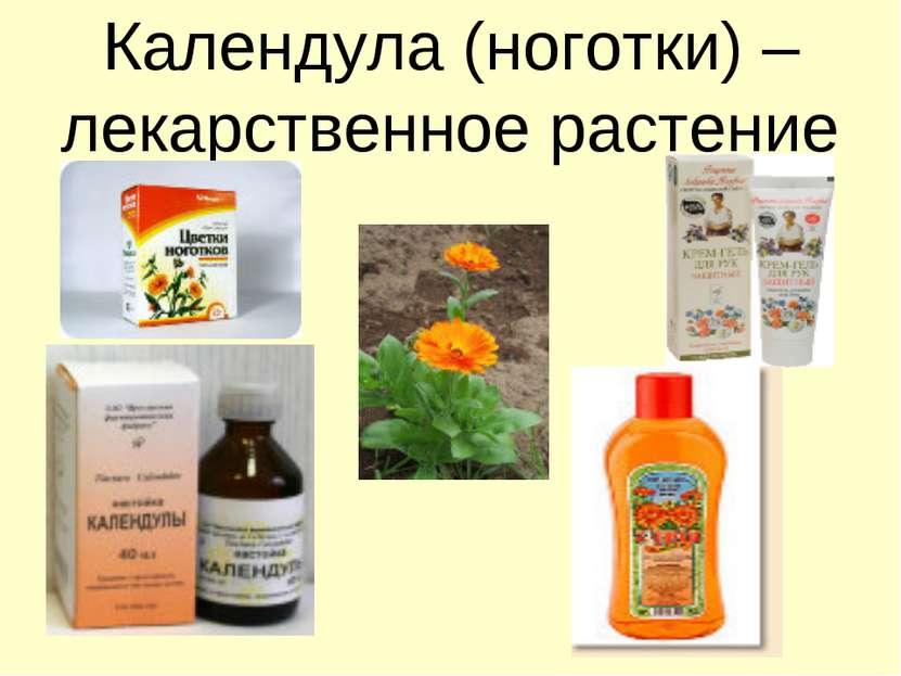 Календула (ноготки) – лекарственное растение