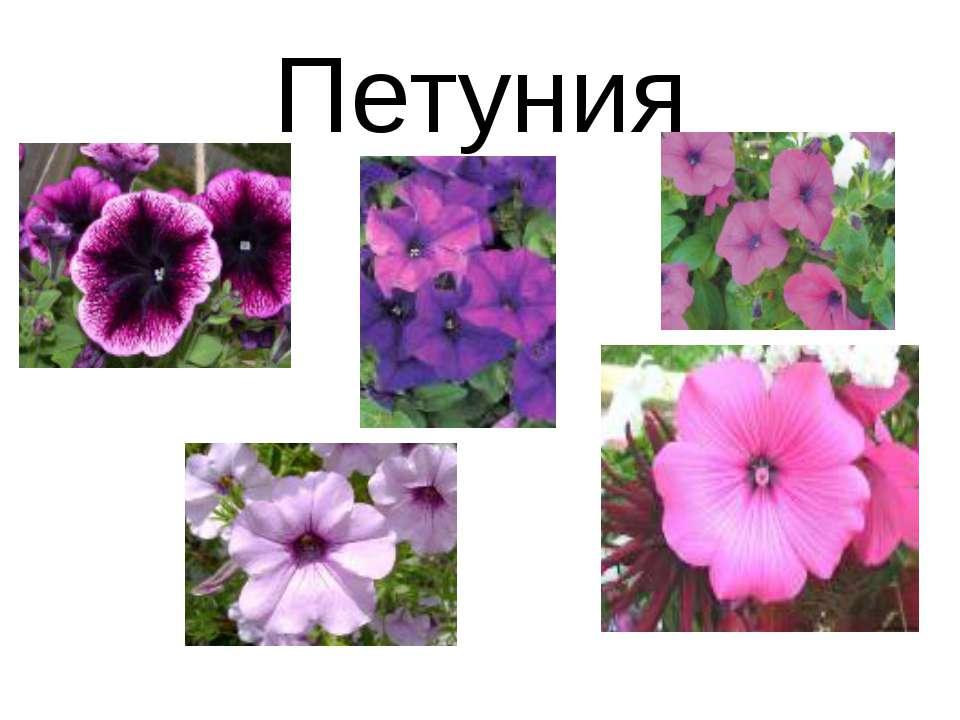 Какие цветы растут на клумбах