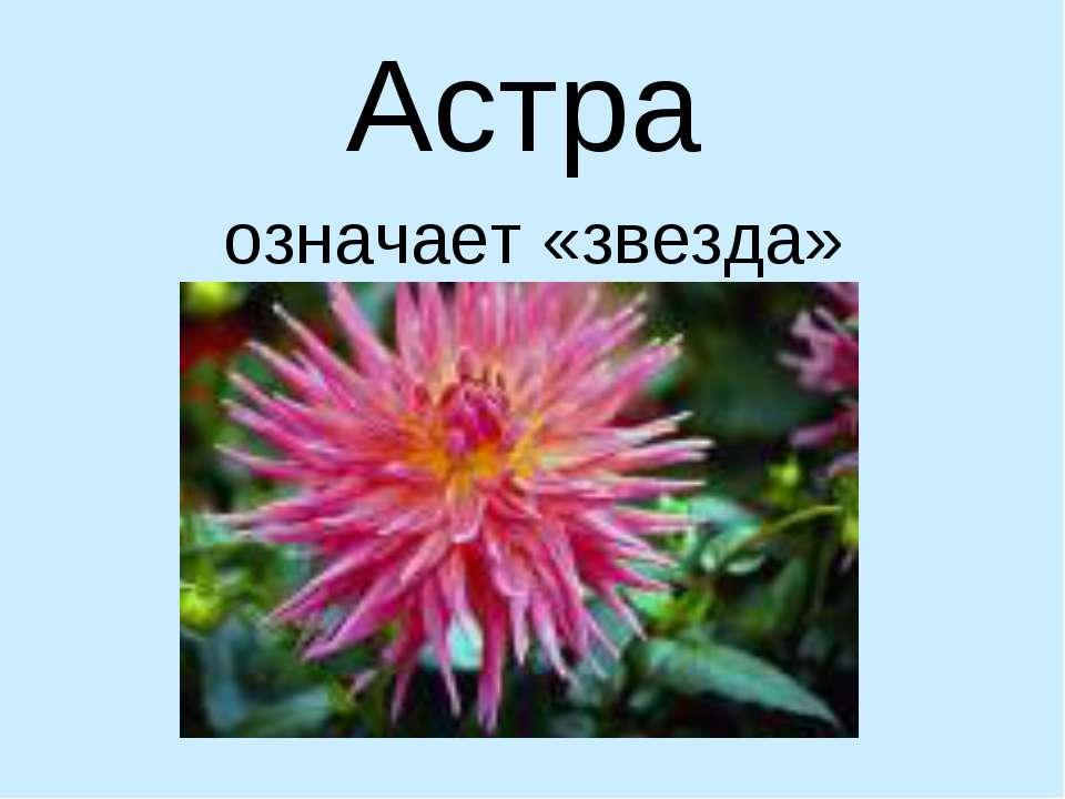 Астра означает «звезда»