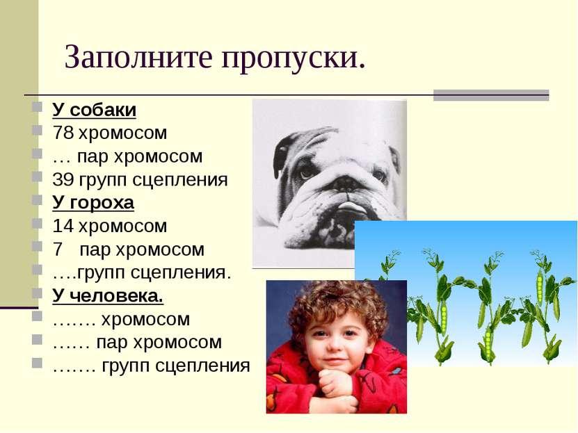 Заполните пропуски. У собаки 78 хромосом … пар хромосом 39 групп сцепления У ...