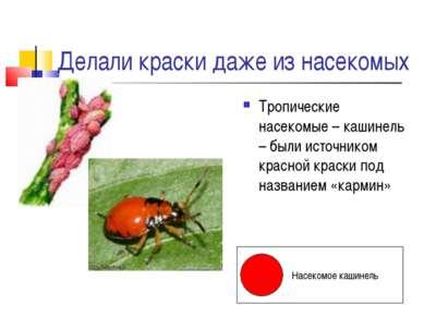 Делали краски даже из насекомых Тропические насекомые – кашинель – были источ...