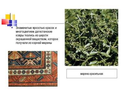 Знаменитые яркостью красок и многоцветием дагестанские ковры ткались из шерст...