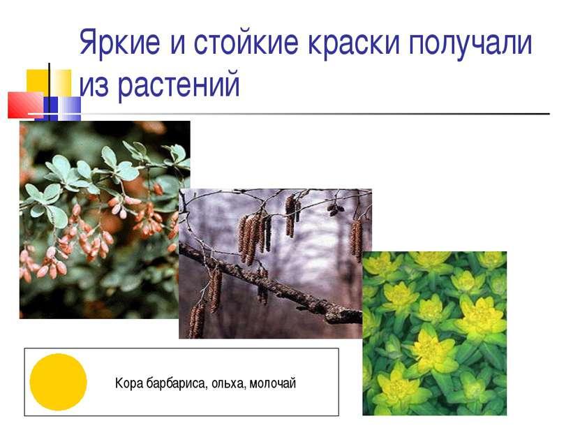 Яркие и стойкие краски получали из растений Кора барбариса, ольха, молочай
