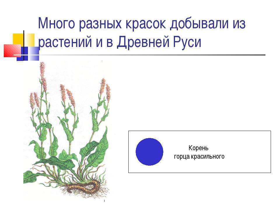 Много разных красок добывали из растений и в Древней Руси Корень горца красил...