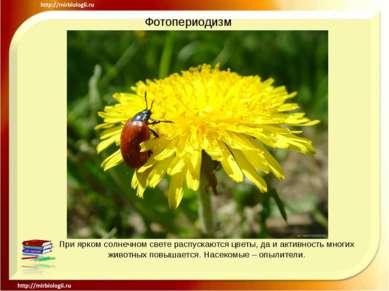 Фотопериодизм При ярком солнечном свете распускаются цветы, да и активность м...