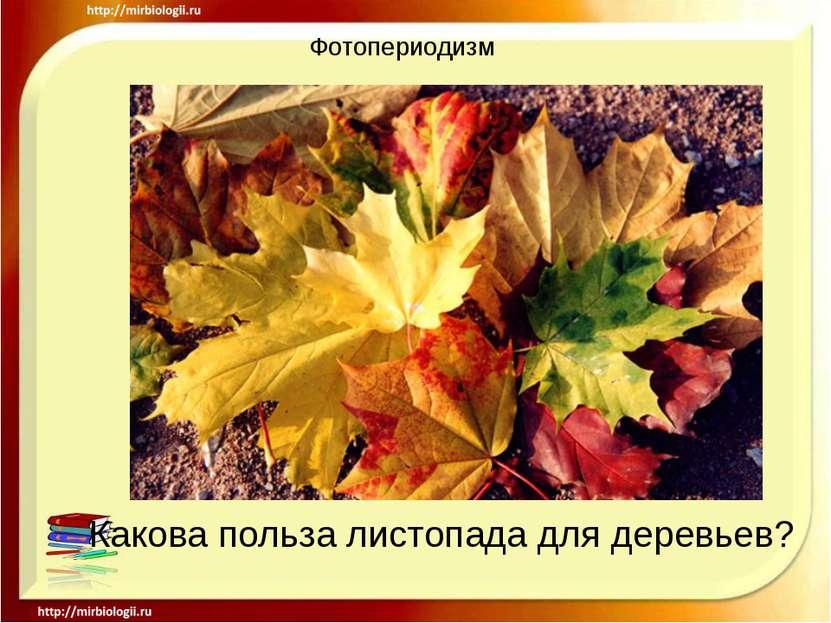 Фотопериодизм Какова польза листопада для деревьев?