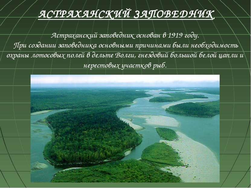 Астраханский заповедник основан в 1919 году. При создании заповедника основны...