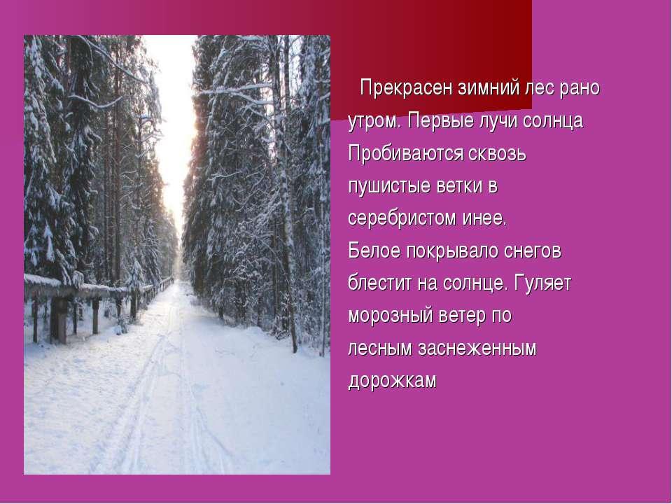 Прекрасен зимний лес рано утром. Первые лучи солнца Пробиваются сквозь пушист...