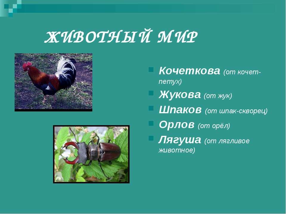 ЖИВОТНЫЙ МИР Кочеткова (от кочет-петух) Жукова (от жук) Шпаков (от шпак-сквор...