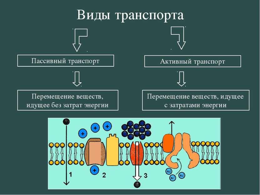 Пассивный транспорт Активный транспорт Перемещение веществ, идущее без затрат...