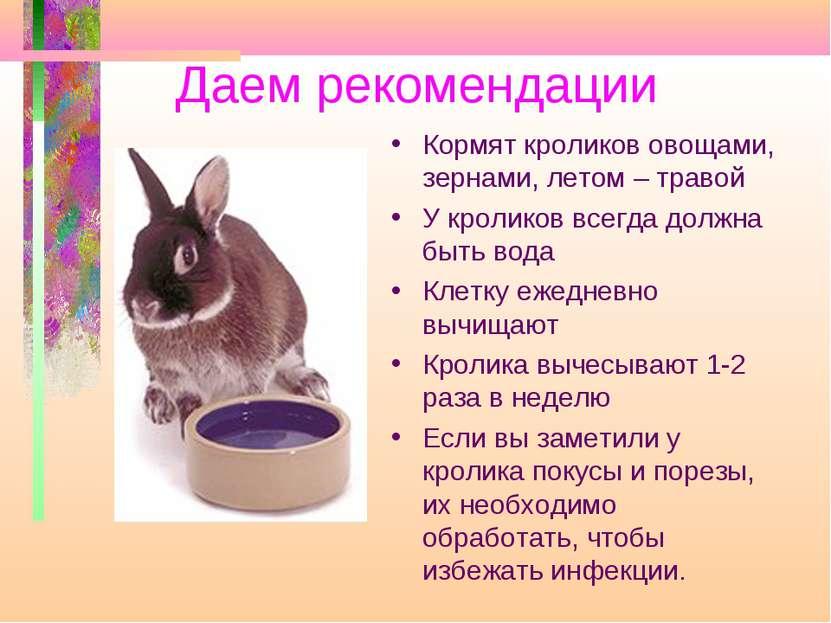 Даем рекомендации Кормят кроликов овощами, зернами, летом – травой У кроликов...