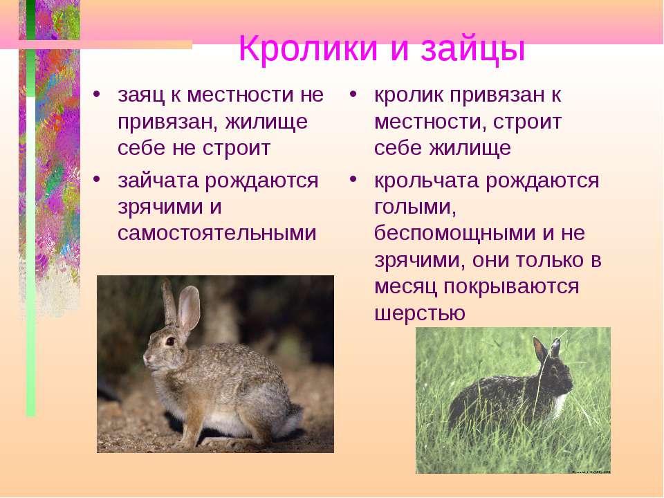 Кролики и зайцы заяц к местности не привязан, жилище себе не строит зайчата р...