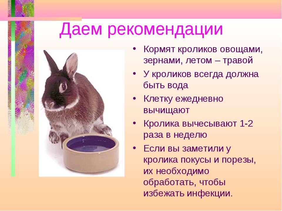 Питательная Знак Условия содержания кроликов в домашних