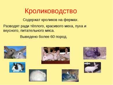 Кролиководство Содержат кроликов на фермах. Разводят ради тёплого, красивого ...
