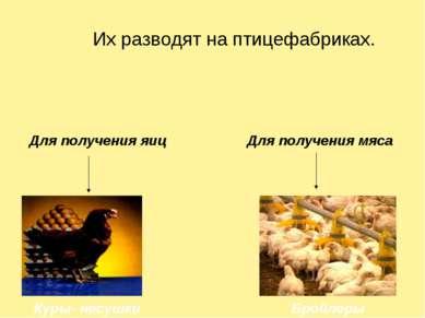 Их разводят на птицефабриках. Для получения яиц Для получения мяса Куры- несу...