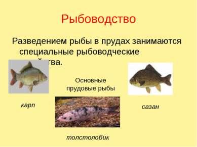 Рыбоводство Разведением рыбы в прудах занимаются специальные рыбоводческие хо...