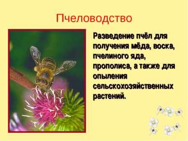 Разведение пчёл для получения мёда, воска, пчелиного яда, прополиса, а также ...