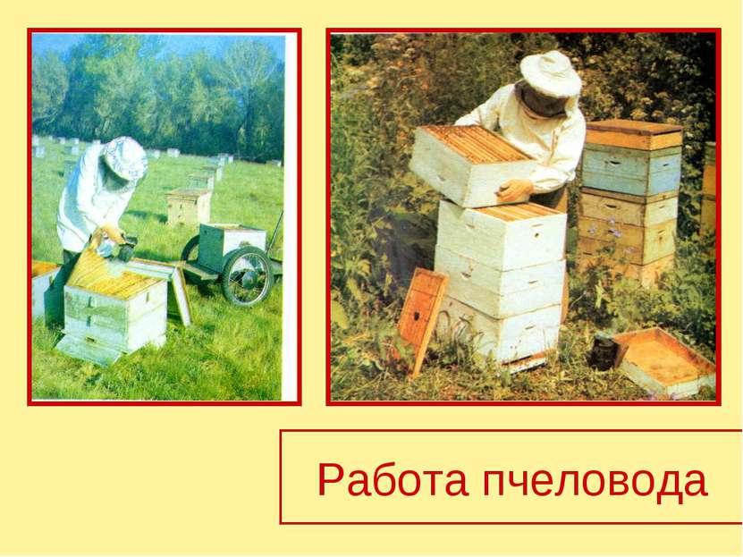 Работа пчеловода
