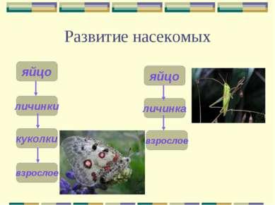 Развитие насекомых личинка яйцо личинки яйцо куколки взрослое взрослое