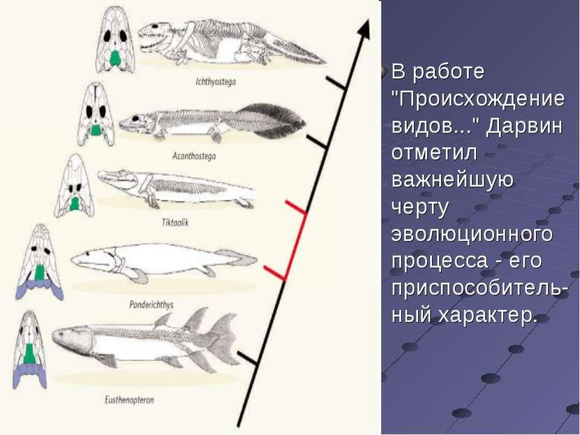 """В работе """"Происхождение видов..."""" Дарвин отметил важнейшую черту эволюционног..."""