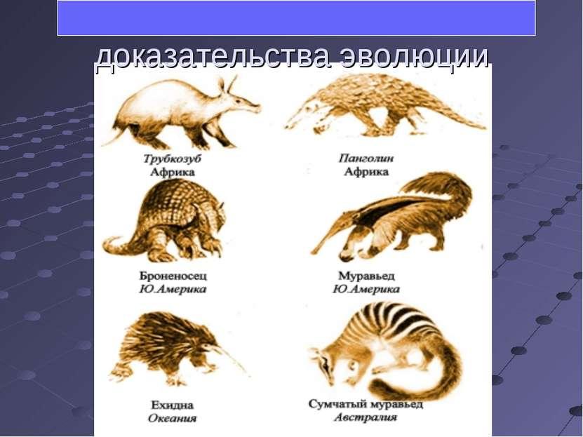 Сравнительно-анатомические доказательства эволюции