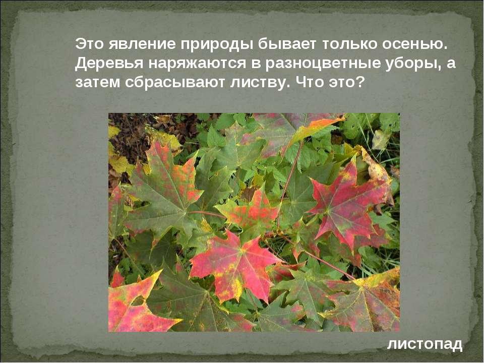 Это явление природы бывает только осенью. Деревья наряжаются в разноцветные у...
