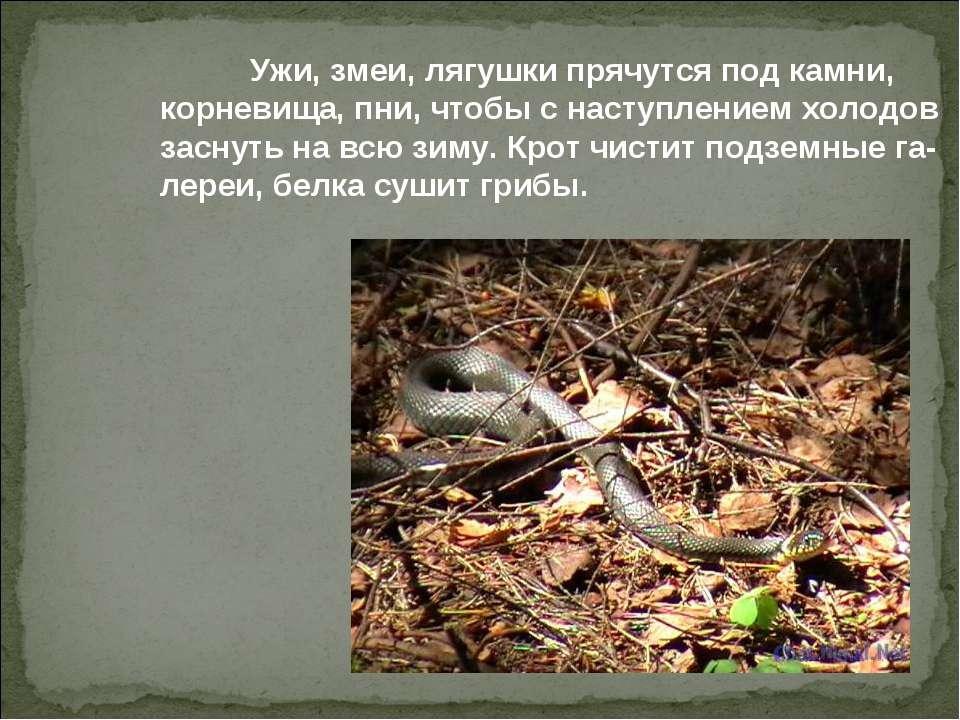 Ужи, змеи, лягушки прячутся под камни, корневища, пни, чтобы с наступлением х...