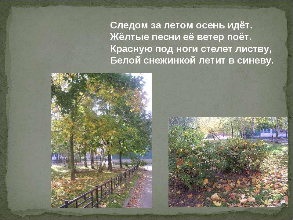 Следом за летом осень идёт. Жёлтые песни её ветер поёт. Красную под ноги стел...