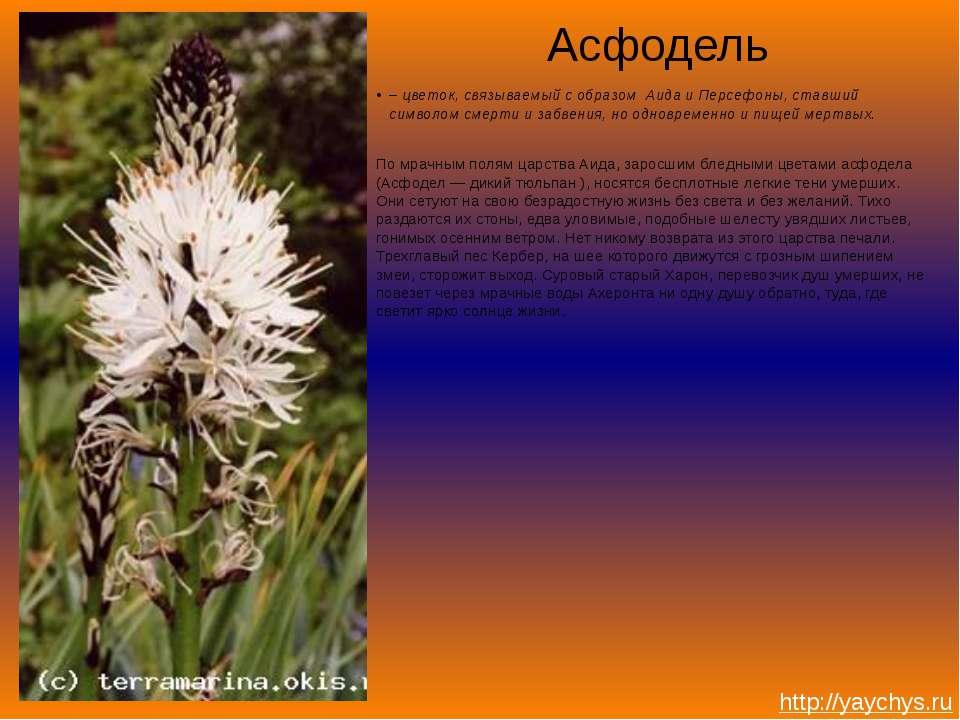 Асфодель – цветок, связываемый с образом Аида и Персефоны, ставший символом с...